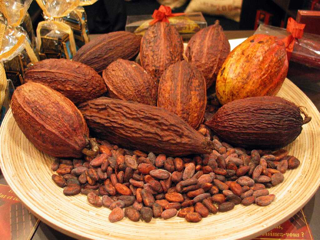 Cocoa Pods and Cocoa Beans The Heat on Hot Chocolate
