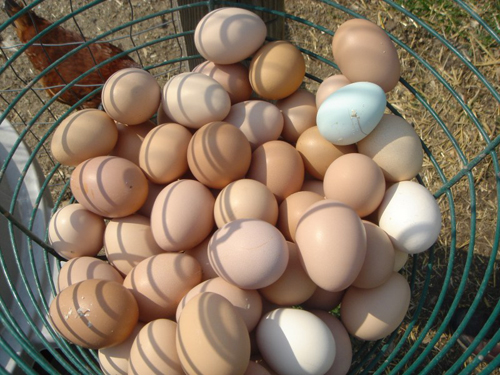 iowa eggs FOIA Records Reveal Potential For Another Massive Egg Recall