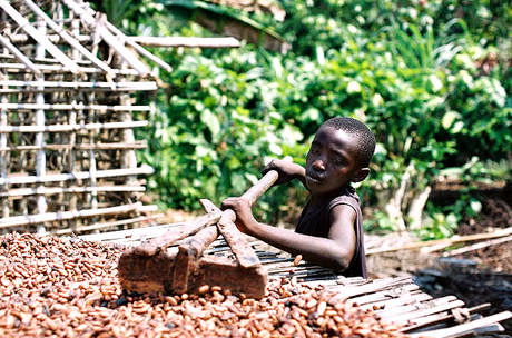 Child Labour in Cocoa Growing Communities Image via ghananewsagency.org  Candy Bars and Child Slaves   One of the World's Best Kept Secrets