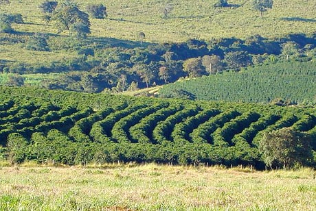 Coffee Farm Minas Gerais Brazil World Coffee Supply Threatened By Climate Change