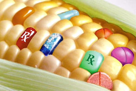 Monsanto Opponents Petition Food Companies to Ban New GMO Corn