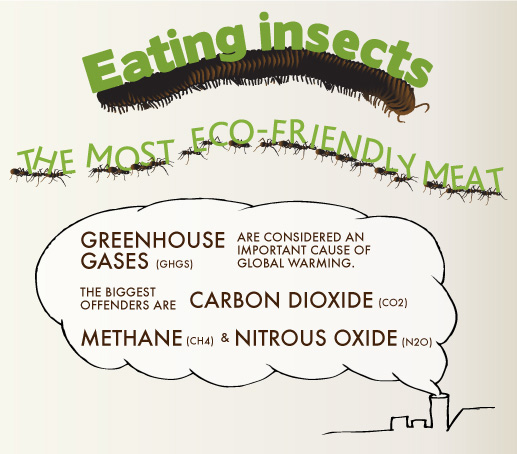 Eating Insects: The Most Eco-Friendly Meat (Infographic)