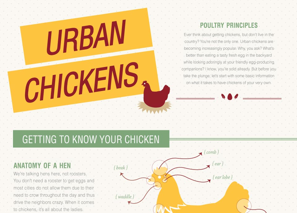Urban Chickens: Getting To Know Your Chicken (Infographic)