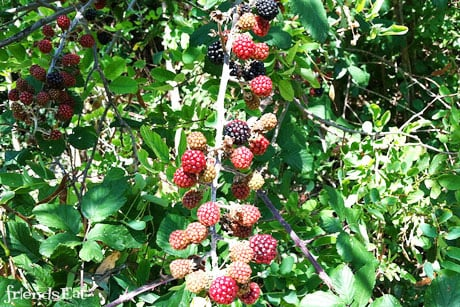 Berries China's Ongoing Food Safety Nightmare