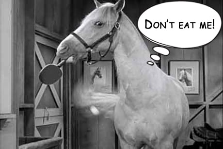 MR Ed horsemeat International Conspiracy Suspected in Europes Horse Meat Scandal